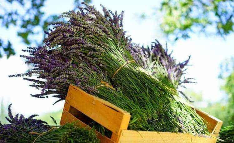 25 plantas medicinales mas poderosas