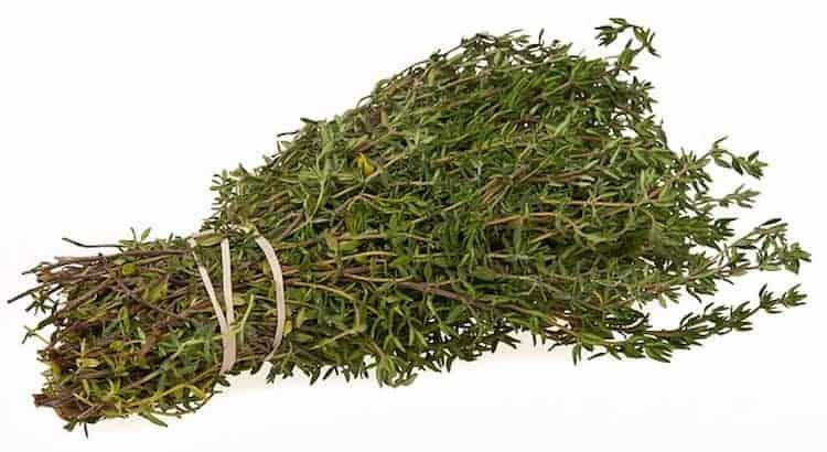 Planta medicinal de tomillo