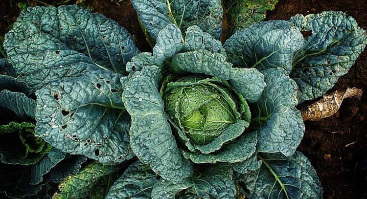 Tipos de nutrientes en los alimentos